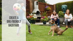 How to create a dog-friendly backyard