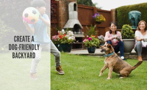 How to create a dog-friendly backyard